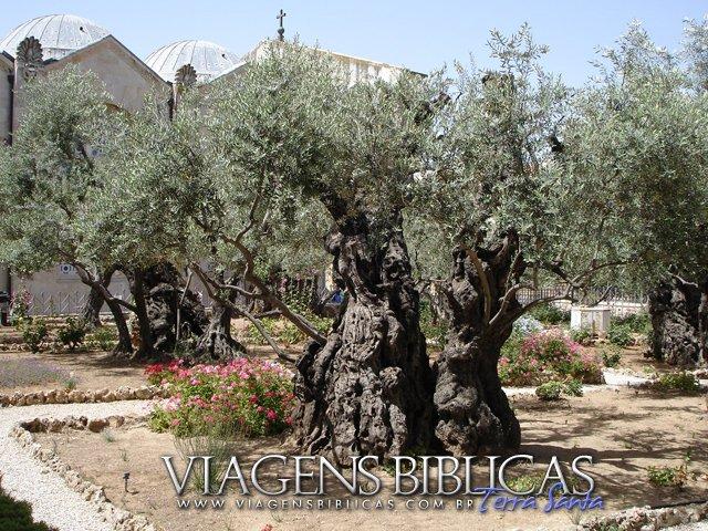 Jardim do Gethsemani