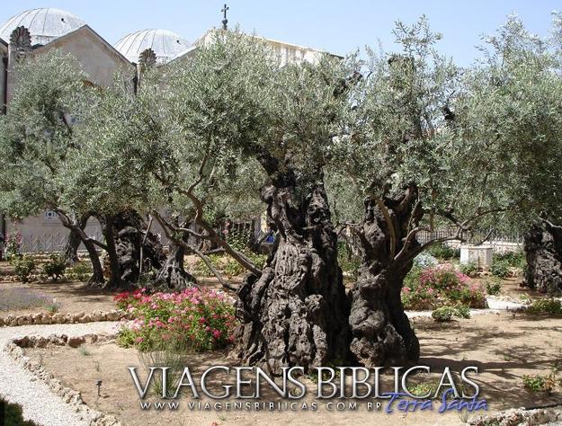 imagens do jardim getsemani